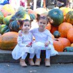 pumpkin farm '19